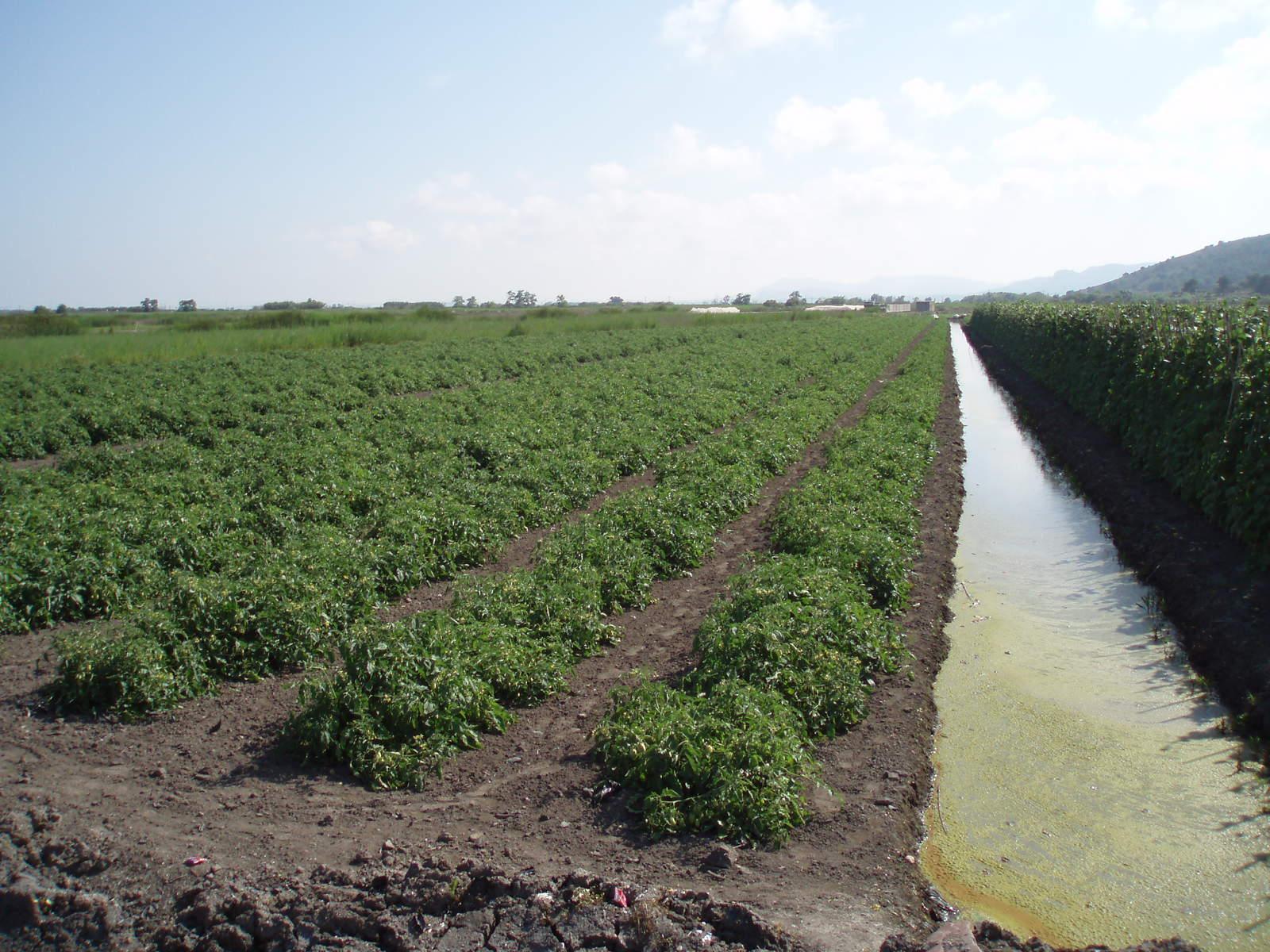 Recomendaciones de salinidad - Drenaje mesa de cultivo ...